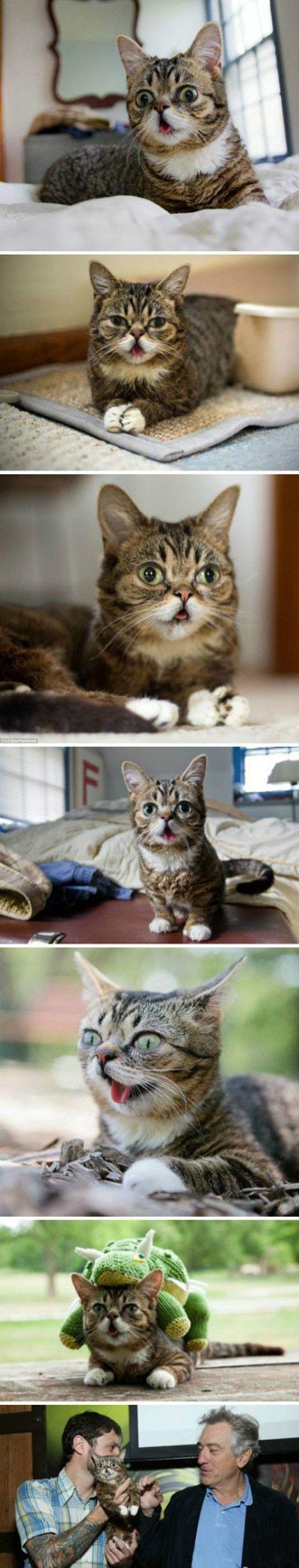 吐舌头的猫咪