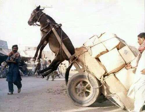 下辈子不能做驴了