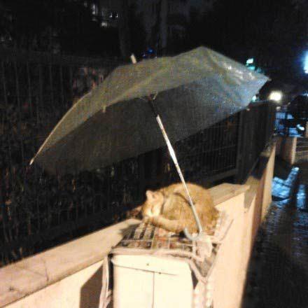 陌生的好心人替流浪猫撑伞遮雨,不久前,一名美国网友分享了一张照片。一只流浪猫睡在旧报纸上,而有个好心人留下一把伞,替它遮雨。一瞬间,他发现这个世界还是很美好,也将这感动感染给更多人。 小小的贴心举动,不仅是对弱势生命的垂怜,也代表这世界仍充满温暖和爱。