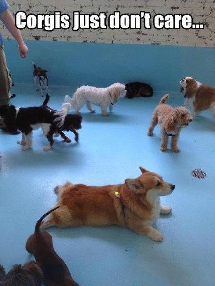 柯基犬:不跟你们这群大长腿玩!