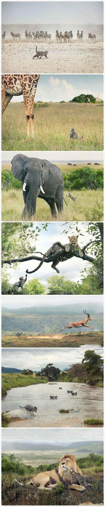 吃了你就有勇气挑战全世界,可爱的猫粮广告