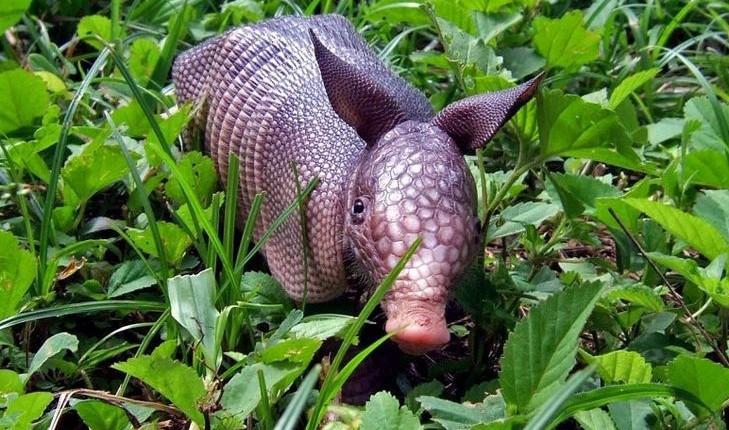 这货应该叫什么啊。。。难道是传说中的野猪兔?不知道野猪对兔子做过了什么。。。。。。