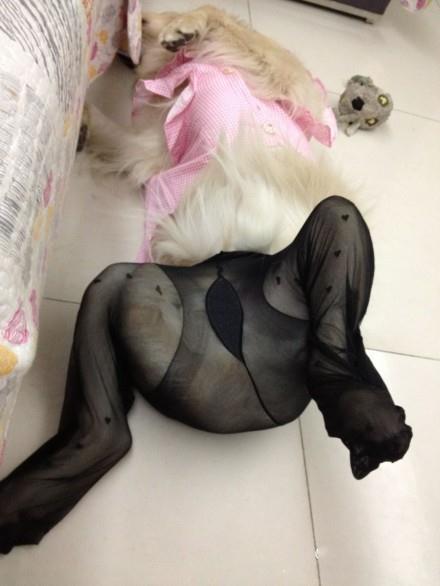 限制级图片。平常这姿势不觉得怎么样。。。。。。一旦穿上黑丝。。。我去!这才叫节操没掉了!(via李李vi)