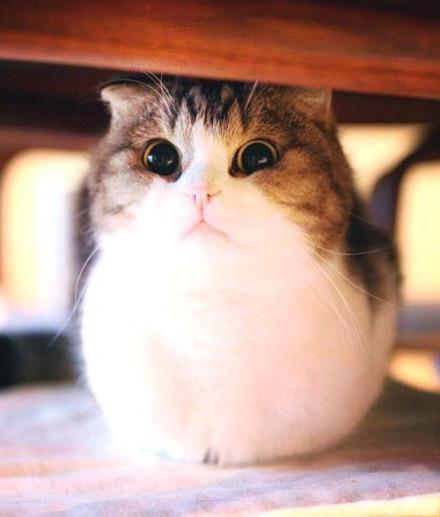 跟我念,我是一个小胖子