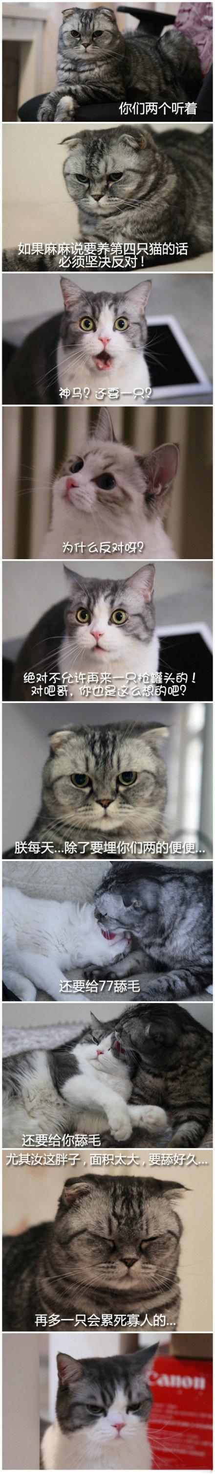 家里不能养第四只猫的理由。笑抽了