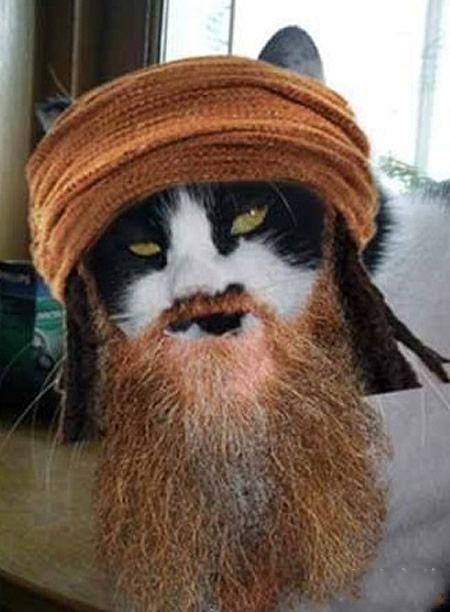 拉登叔叔家的猫