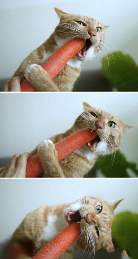 萝卜含丰富的胡箩卜素,有益又健康,爱屎了