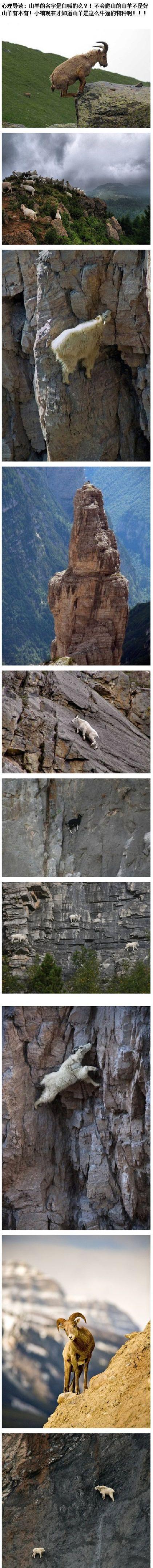 我现在才知道,山羊是这么牛逼的物种。。。。。。
