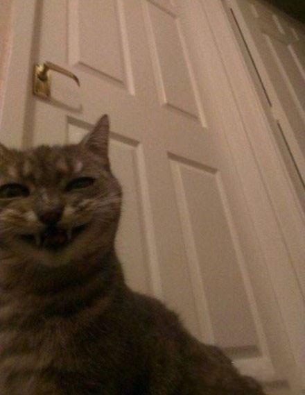 你大概从未想过,在家里隐蔽的角落里放一台摄像机。这样,你就能看到等你睡下,万籁俱静时,你家猫脸上的表情。。
