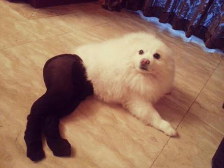 白富美,高贵,撩人,黑丝袜!丧心病狂!!!