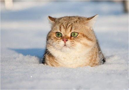 我是土拨猫~~~好萌的小胖纸!!~