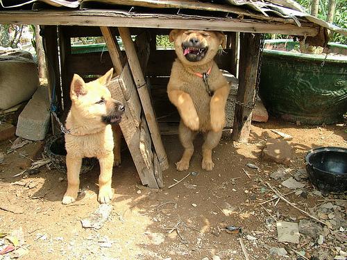 狗狗瞧见有人来了,开始狂打招呼,丫撞到到头了吧?!