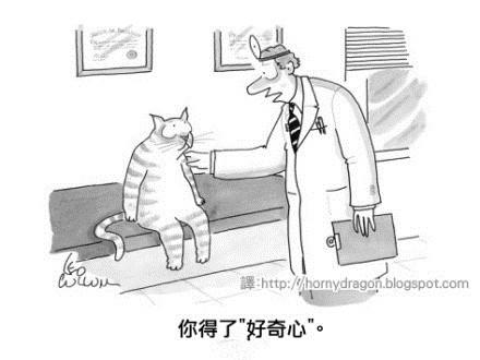 对于猫来说这是绝症!