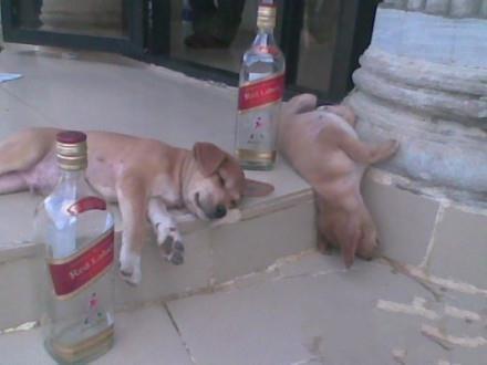 这是一起灰常严重的酗酒事件。。。