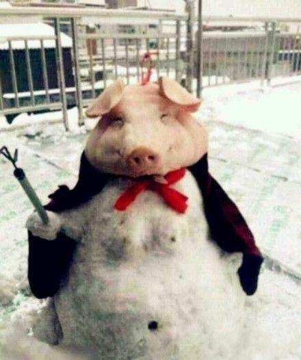 今天遇见大师级的了,其他雪人弱暴了~