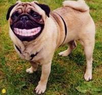 """亚马逊上有本书叫做""""测测你狗狗的智商"""",售价4.99刀。据说检测的原理是这样的,如果你花钱买了这本书,那么你狗狗的智商肯定比你高。~"""