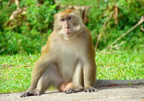 """一猴子死后回到阴间,给阎王说希望下辈子能变成人。阎王就让小鬼领猴子到语言培训班学习人类语言,还不到一节课,猴子就吵着太难了,不学了。阎王对猴子说:""""你这畜生,要是连句人话都不会说,将来怎么做人!"""""""