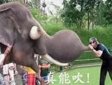 """一天,一头大象遇见一头骆驼,大象冲着骆驼乐。:""""你笑什么?""""骆驼说。:""""还有mi mi 长在背上的""""大象说。:""""我不和jj长在脸上的东西说话""""骆驼说。又来了一条蛇,蛇听到了这些在一边笑。骆驼和大象一起说:""""我们不和脸长在jj上的东西说话""""。"""