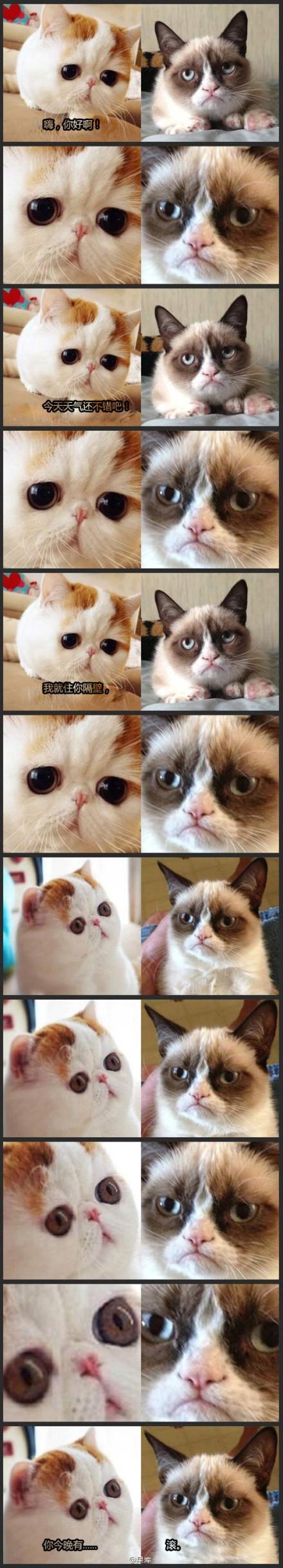 同样都是猫,萌法完全不一样~