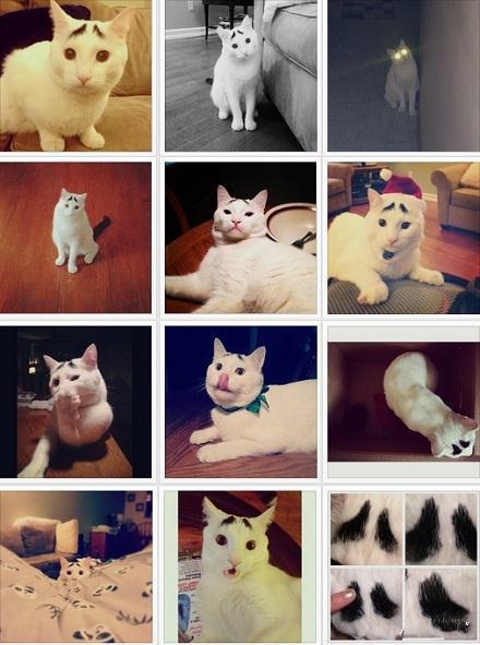这只猫……眉毛太逗了哈哈哈