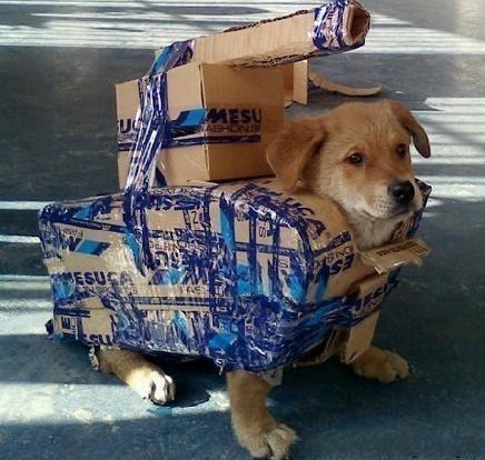 也不知是谁家的坦克狗~