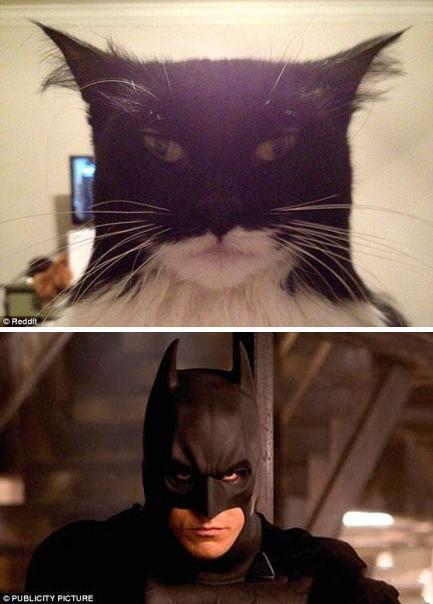 什么蝙蝠侠都弱爆了,看我猫星侠。。。