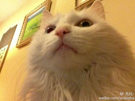 救命我不在的时候我家猫用IPAD自拍啊啊啊啊啊啊啊啊啊啊啊啊啊啊!!!刚才翻相册才发现吓死我了!!!!