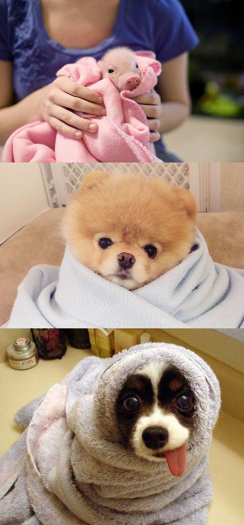 刚出浴的小可爱们!
