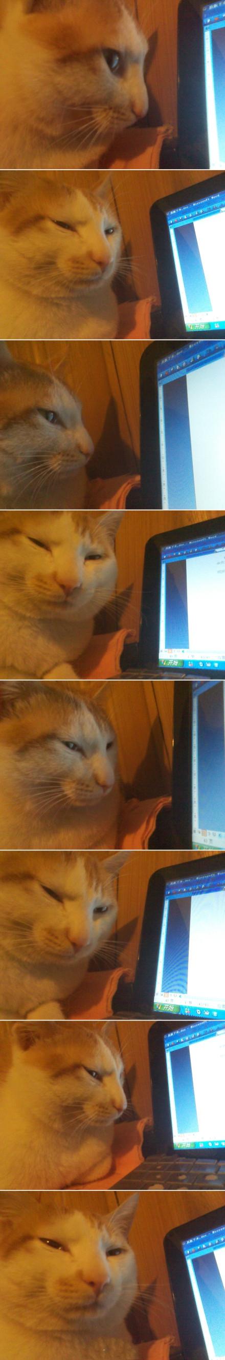 """我写文时,二狗喜欢趴在我电脑边,看我的文几眼,看我一眼,看我的文几眼,看我一眼,看我的文几眼,看我一眼,看我的文几眼,看我一眼,看我的文几眼,看我一眼,看我的文几眼,看我一眼…………………………………………""""玛蛋!!我的文肿么了?不想看滚蛋!你那是什么眼神!!!""""【via @恩顾】"""