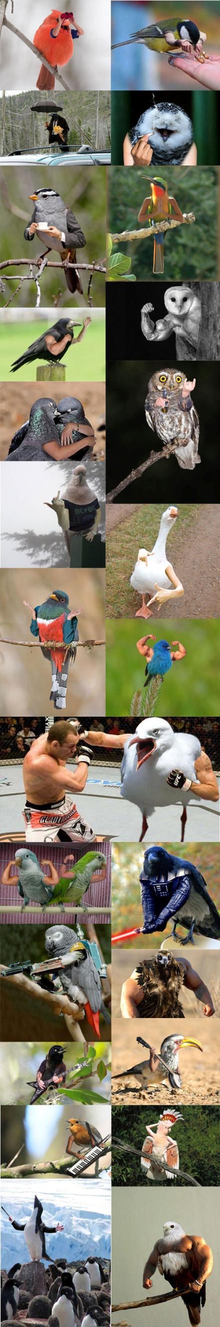 如果小鸟们有手...毫无违和好嘛!【转】