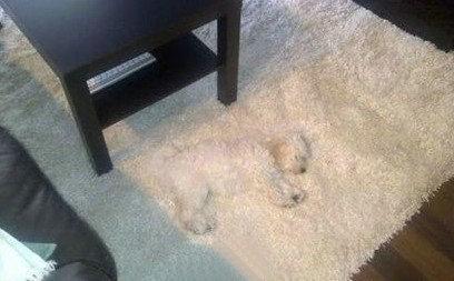 据说它的主人找遍了家里每个角落,还差点报案寻狗。。。