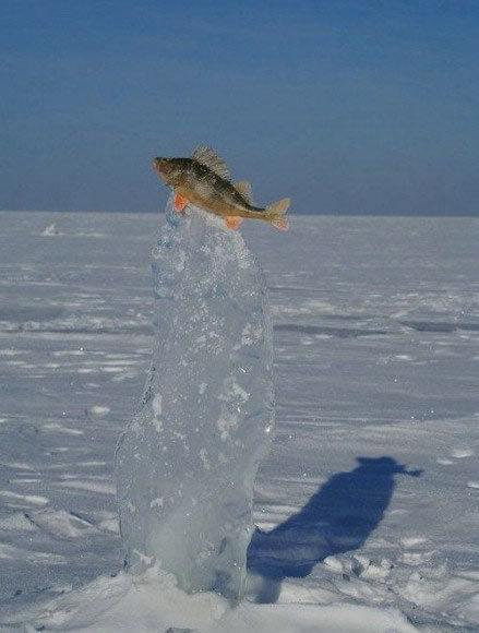 一条悲催的鱼,跳到半空中被冰住了。。。