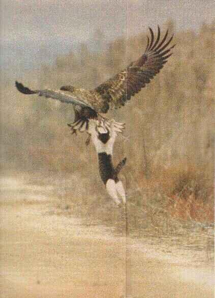 后来便有了猫头鹰。。。