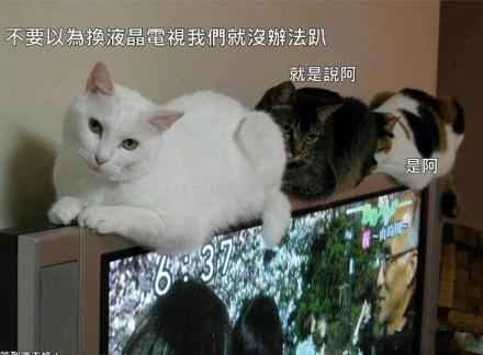 不要以为换液晶电视我们就没办法趴~~