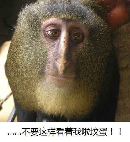 【猕猴桃你吃过 猕猴桃猴你见过吗】生物学新闻!刚果(金)雨林中确认了新物种!科学家John Hart在2007年初次见到了这种猴子,现在命名为lesula,但是这只猴子好好笑。。。猕猴桃,有人说像尼古拉斯凯奇,含情脉脉的眼神透露出来蛋蛋的忧伤,超治愈的!瞬间心境就平和了。。