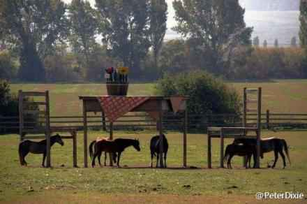 农场主想给他的马建一个凉棚,但是当地政府不批许可证,所以他就做了几个巨型桌子和两个椅子。