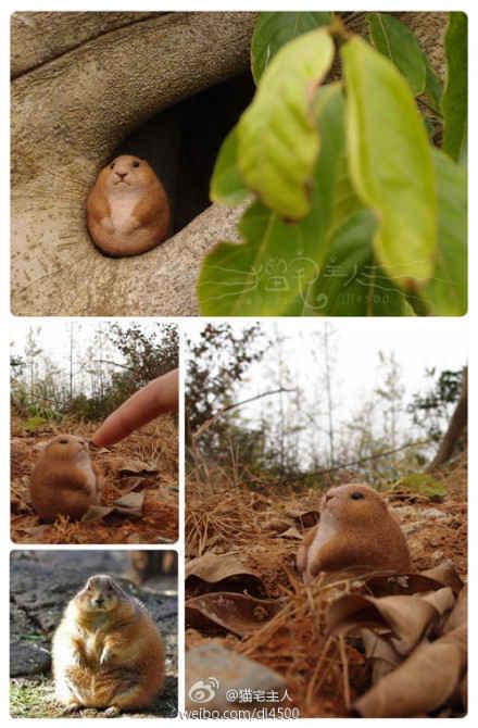 标准土肥圆—— 一只土拔鼠的忧桑……