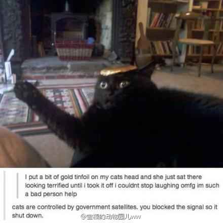 From 国外网友:我把一张锡箔纸放在我家猫头上他就那样呆住不动了直到我把它拿下来XDDD我到现在还忍不住大笑原谅我我实在太坏了。评论:你用那个切断了喵星人的信号接收器..所以你家猫停止了运作..