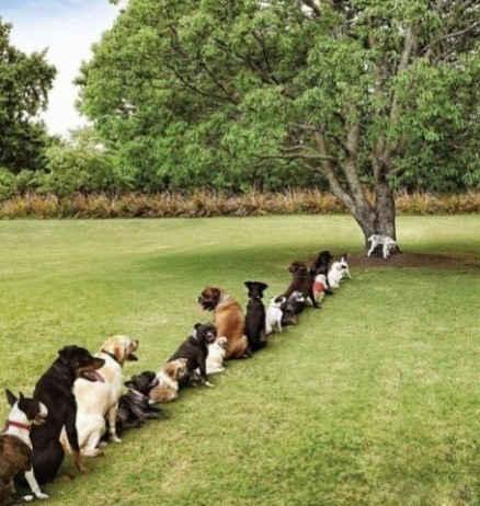 在后来的后来,这棵大树被砍掉了,一群灰常有素质的狗狗,全被憋死了。。。