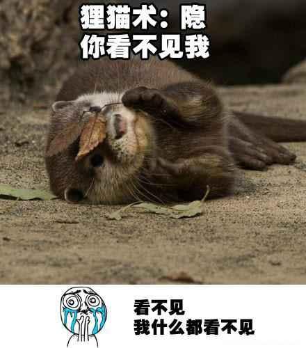 狸猫的忍术~~