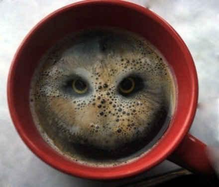 往咖啡杯里扔了两颗甜麦圈,然后。。。
