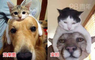 在网上看到戴猫发卡的狗狗好萌啊,有木有。。。我也戴上试试。。。。。尼玛啊。。。