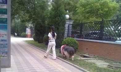 现在流行这种宠物哦,带着出去散步太霸气了!!!