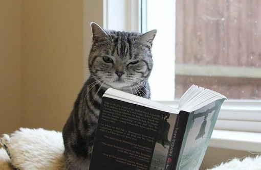 我是一个文艺青年,只是····为什么一看书就想睡觉呢······