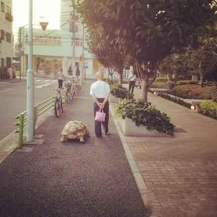 龟是难得的一种能陪你到老的宠物。