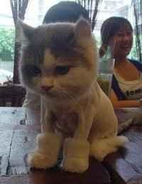 一只穿着UGG的猫。。。我勒个去。。。