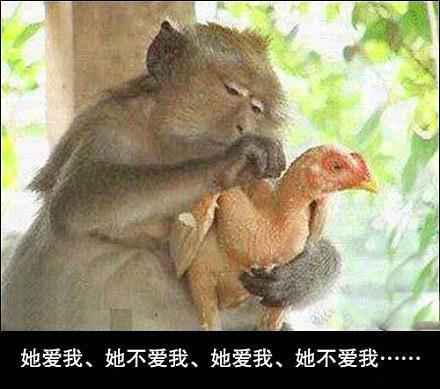 悲催的鸡!!!