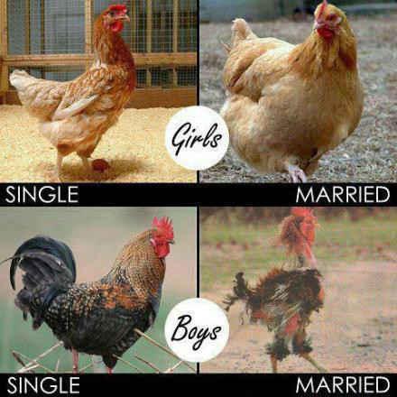 男女的婚前婚后..