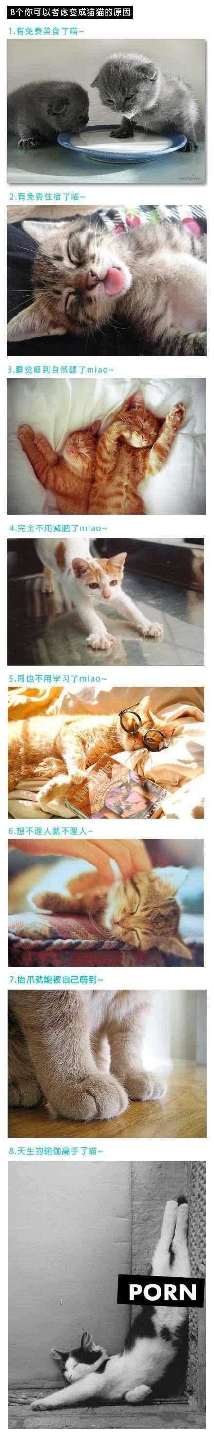 8个你可以考虑变成猫的原因~~