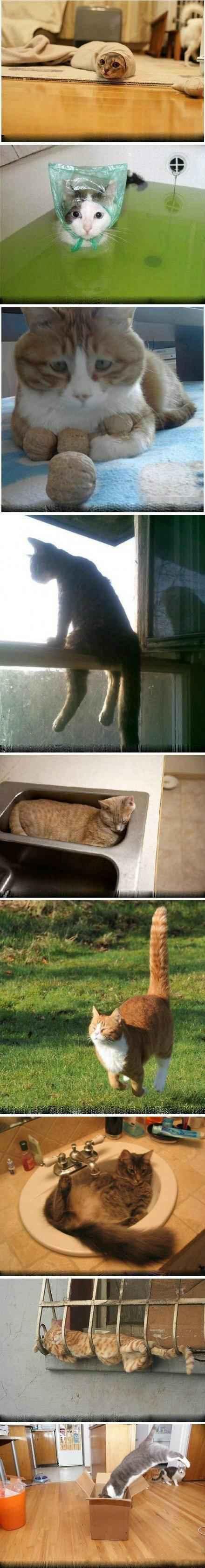 你永远无法猜透,一只猫的思维。。。